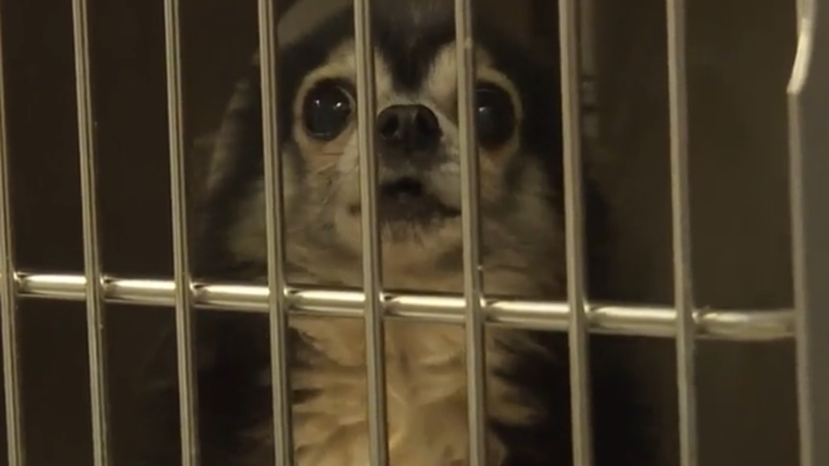 Animals in Carolina puppy mill bust given medical care, new chance at healthy, happy life