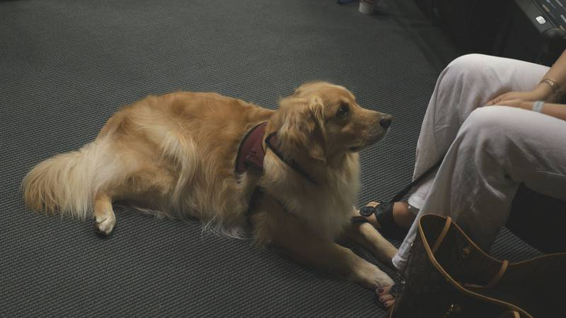 An assistance dog looks up at its owner Thursday at the moral injury summit hosted by Cape Fear...