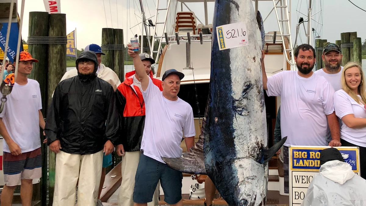 'Natural' catches 521.6-pound big blue marlin at Day 2 of Big Rock