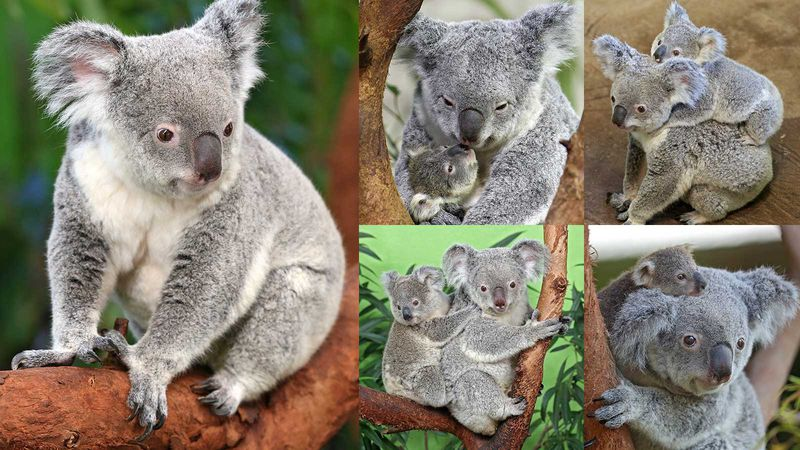 Lottie came to Riverbanks in 2003 as a gift from Queensland, Australia.