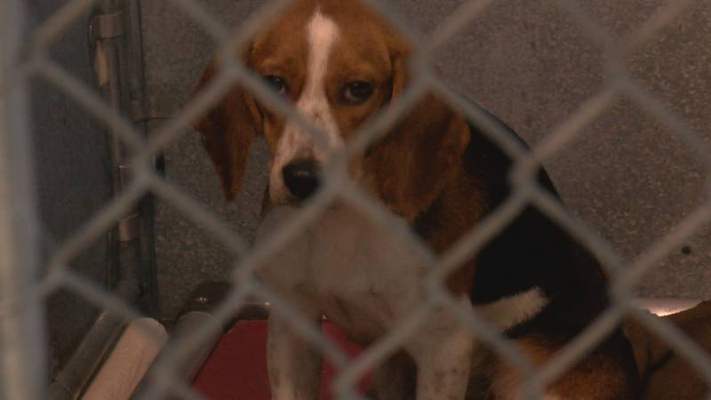 Clear the Shelters: Brunswick County Animal Protective Services