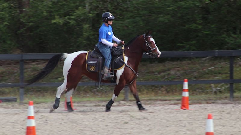 Andrea Gordon on one of the obstacles required in the Mounted Patrol Unit certification...