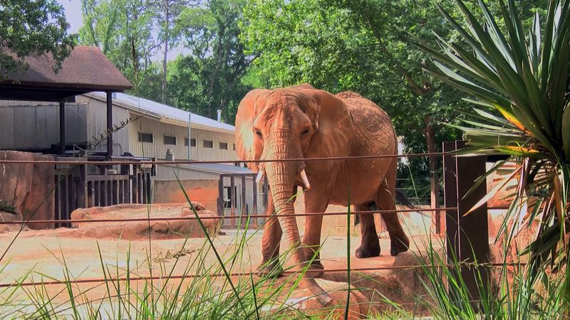 Robin was one of two African elephants at the Riverbanks Zoo. She was 49.