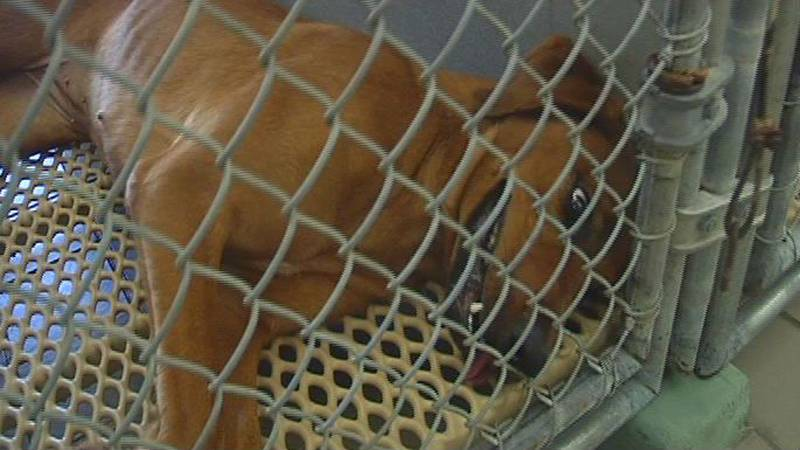Music helps calm animals at the New Hanover County Animal Shelter.