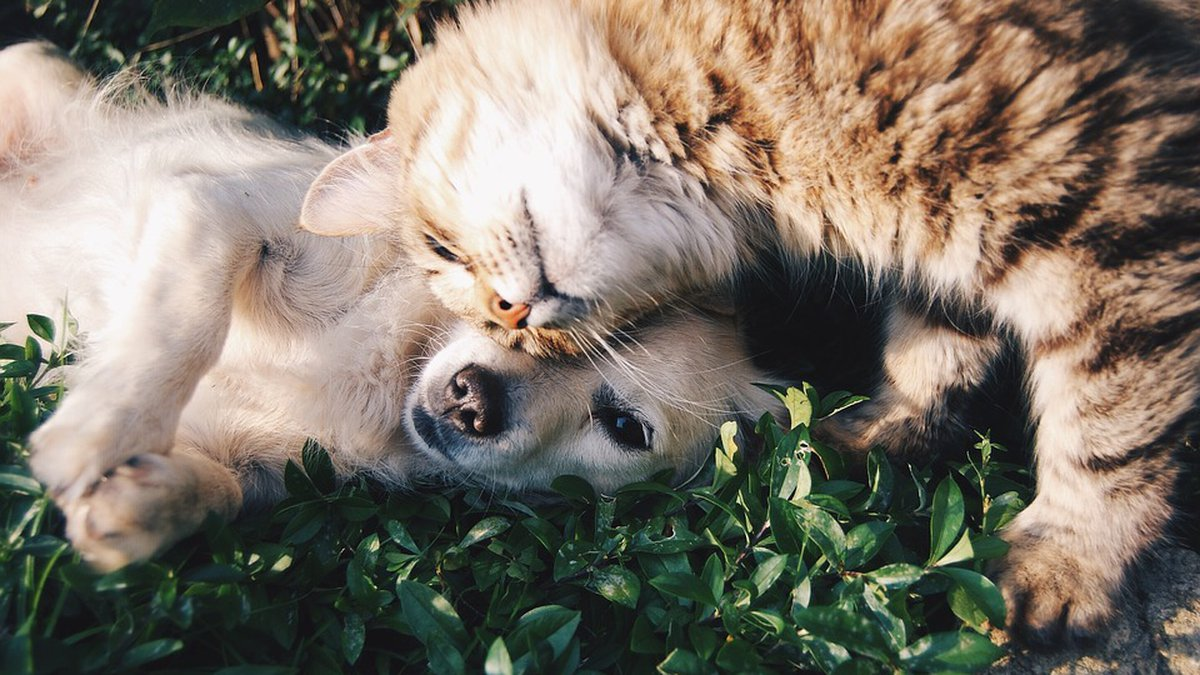 The Pender County Animal Shelter is waiving pet adoption fees Tuesday. (Source: Pixabay)