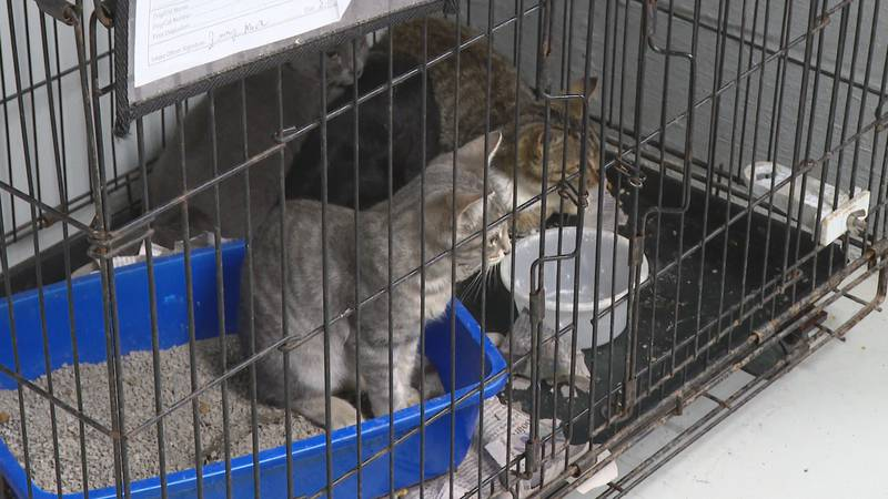 Clear the Shelters: Columbus County