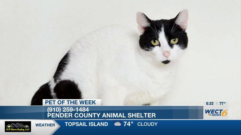 Pet of the week: Pender Cat