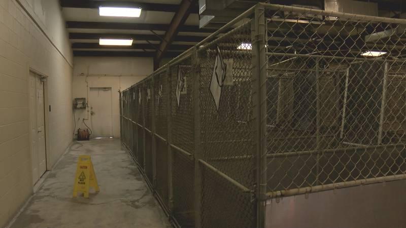Sheriff Jody Greene starts major renovations at the animal shelter