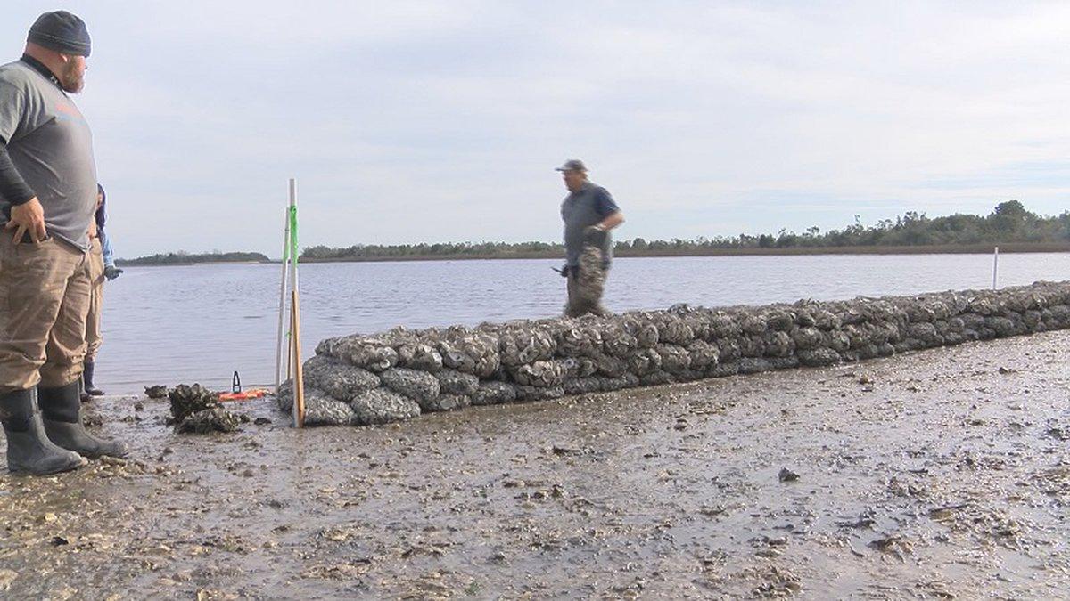 Sunset beach volunteers help build living shoreline.
