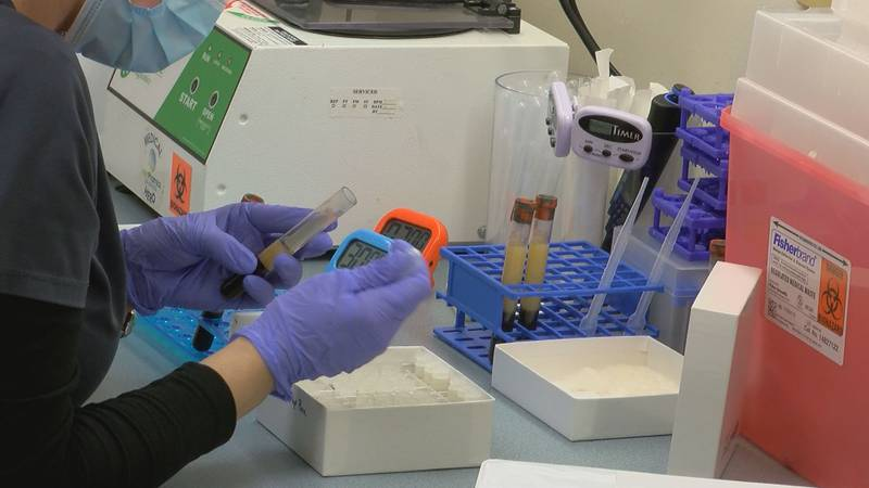 An employee processes blood samples taken as part of a study of a Pfizer BioNTech COVID booster...