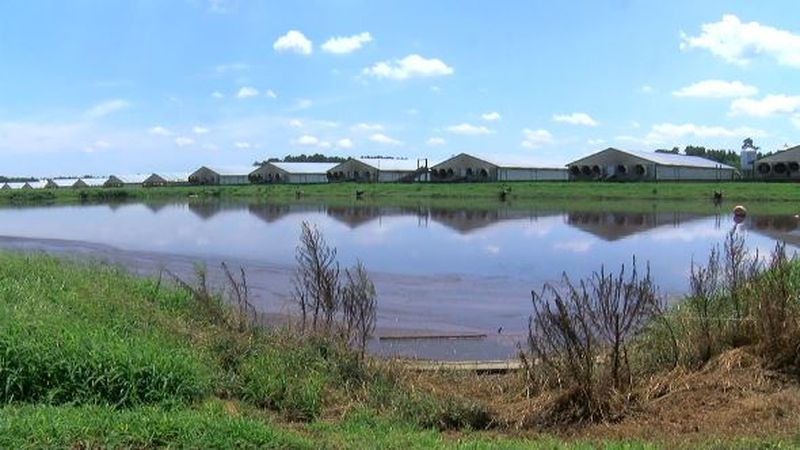 In the midst of a massive lawsuit, Smithfield Foods announced plans to cap most of its hog...