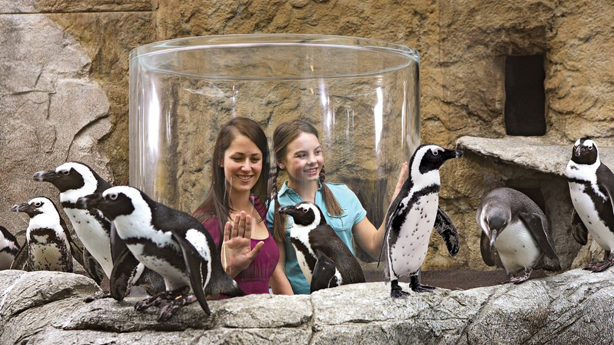 Ripley's Penguin Playhouse is coming to Ripley's Aquarium Myrtle Beach in early 2020.
