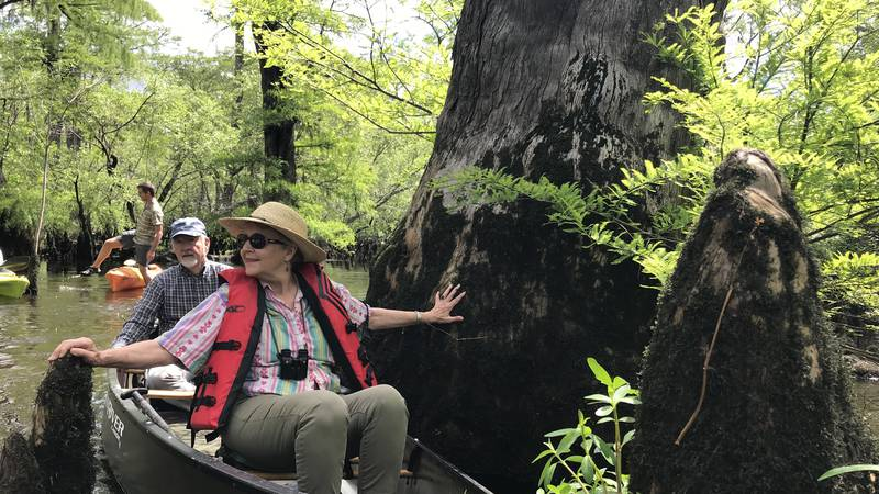 Retired biologist Julie Moore puts her left hand on a 2,624-year-old cypress tree as David...