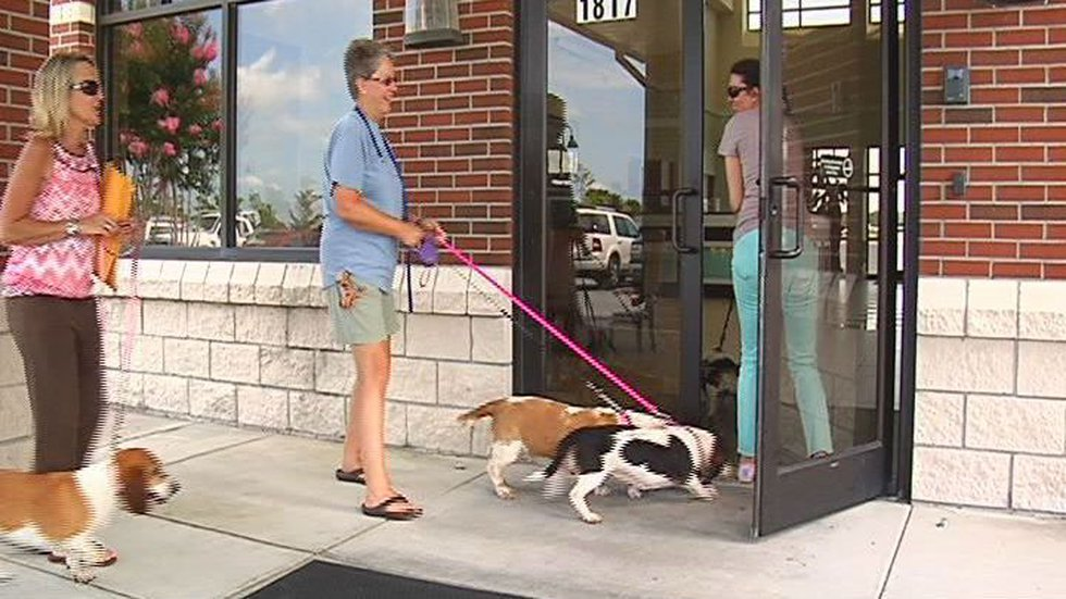 Carolina Basset Hound Rescue gets the dogs from shelters and connects them with a larger group...