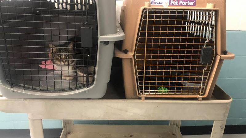 Two cats dumped at closed shelter