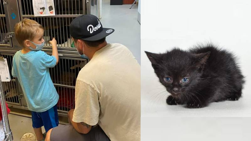 Pender County family gives home to kitten