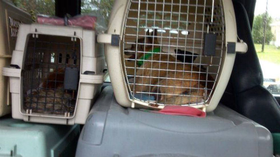 Three veterinarians were called in to assess the conditions of the animals, which suffered a...